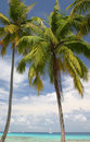 Palm Trees On A Beach Stock Image - 5233261