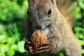 Squirrel Stock Photography - 52349482