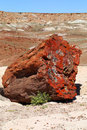 Petrified Forest Stock Photography - 52388132