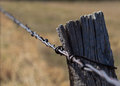 Barbed Wire Fence Royalty Free Stock Image - 52398806