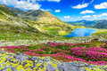 Magical Rhododendron Flowers And Bucura Mountain Lakes,Retezat Mountains,Romania Royalty Free Stock Photography - 52404487