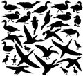 Duck Silhouettes Stock Image - 52406671