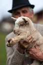 Old Man With Baby Goat Royalty Free Stock Image - 52411466