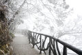 The Way Under Trees With Snow Stock Images - 52419984