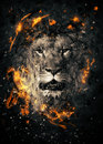 Lion Royalty Free Stock Images - 52446739