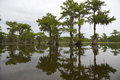 Classic Bayou Swamp Scene Of The American South Stock Photo - 52484330