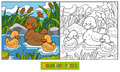 Coloring Book (duck) Stock Images - 52515244