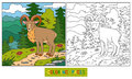 Coloring Book (urial) Royalty Free Stock Photos - 52515308