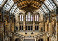Natural History Museum Stock Images - 52521334