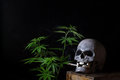 Skull Smoking Cannabis Stock Photos - 52614053