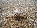 Snail On The Coast Of Sea Royalty Free Stock Image - 52621746