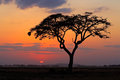 Sunset With Silhouetted Tree Royalty Free Stock Photo - 52628955