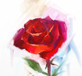 Red Rose Flower With Green Leaf Oil Painting. Royalty Free Stock Image - 52657046