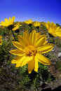 Summer Time Flowers Stock Photography - 5278132
