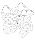 Snails Coloring Page Stock Images - 52718534