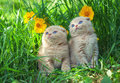 Two Little Kittens Royalty Free Stock Image - 52729476