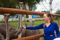 Feeding Ostrich Stock Photos - 52755753