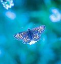 Morning Butterfly On Green Meadow Stock Photography - 52758872