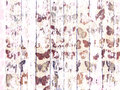 Shabby Wood-grain Texture White Washed With Distressed Butterfly Pattern Stock Photography - 52770112
