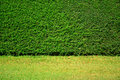 Green Leaves Wall Background On Green Grass Field. Stock Image - 52788621