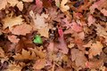 Dead Leaves Background Stock Photo - 52802300