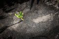 New Tree Growth Up On Dead Tree As Business Concept Stock Photo - 52869290