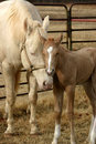 Mare And Foal Stock Images - 535184