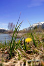 Springtime Dandelion In The Mountains Royalty Free Stock Images - 5300949