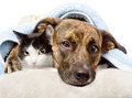 Sad Dog And Cat Lying On A Pillow Under A Blanket. Isolated Stock Images - 53056574