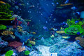 Aquarium With Colorful Tropical Fish And Beautiful Corals Royalty Free Stock Photo - 53063755