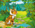 Cartoon Animal Scene - Caricature - Tiger Royalty Free Stock Image - 53081646