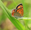 Butterfly Stock Photos - 5312443