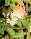Butterfly Stock Image - 5312471