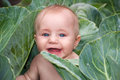 Happy Beautiful Baby In Green Cabbage Leaves Royalty Free Stock Photos - 53120198