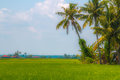 Rice Paddy Royalty Free Stock Images - 53137239