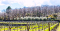 Empty Vineyard In Etna Winemaking Area In Spring Royalty Free Stock Images - 53173129