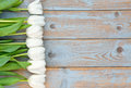 Row Of White Tulips On A Blue Grey Knotted Old Wooden Background With Empty Space Layout Royalty Free Stock Images - 53197919