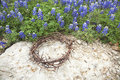 Crown Of Thorns On Rock Beside Texas Bluebonnets Stock Photos - 53205013