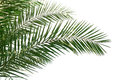 Palm Leaves Royalty Free Stock Image - 53225216