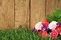 Flowers In Front Of A Fence Royalty Free Stock Images - 53245539