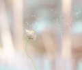 Dandilion Grass Flower Flying When The Wind Blow Vintage Stock Photos - 53259163