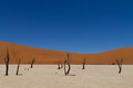 Dead Vlei Royalty Free Stock Images - 53260919