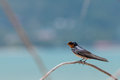 Little Bird On Branch Royalty Free Stock Image - 53294996
