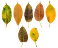 Set Of Dry And Autumn Leaves Stock Photography - 53297462