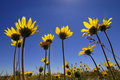 Summer Time Flowers Royalty Free Stock Image - 5338026