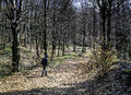 Man Hiking In The Woods Stock Photography - 53304792