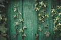 Ivy Wall Stock Image - 53317781