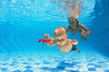 Child With Woman Diving For A Red Flower In Pool Stock Photos - 53335143