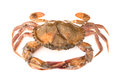 Soft Shell Crab Royalty Free Stock Image - 53356196