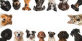 Breed Dogs Royalty Free Stock Photo - 53358125
